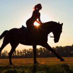 Paardrijden – wat in te pakken voor een paardrijavontuur